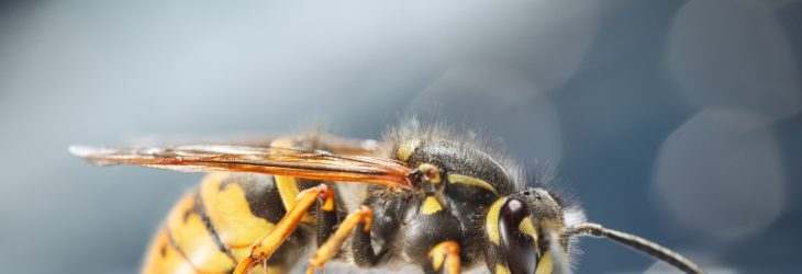 Wasp control at DH Pest Control Nottinghamshire