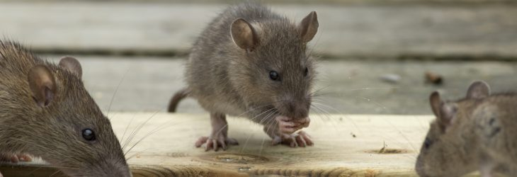 Rodent control on farms at DH Pest Control